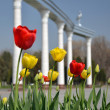 Stock Photo: Tulips on background of Mustakilliq Gate