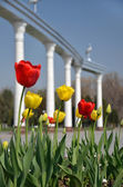 Tulips on the background of the Mustakilliq Gate — Stock Photo