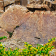 Stock Photo: Rock paintings of Buddhin Kazakhstan