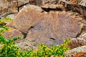 Rock paintings of Buddha in Kazakhstan — Stock Photo