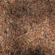 Stock Photo: Anthill close up