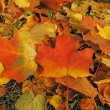 Background of autumn leaves — Stock Photo