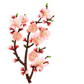 Cherry blossom branch abstract background — Stock Vector