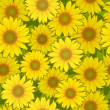 Royalty-Free Stock Vector Image: Sunflower flower seamless background
