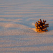 Foto Stock: Cone on sand beach sunset