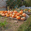 图库照片: Crop of pumpkins