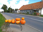 Roadside trade in pumpkins in the village, Russia — Stock Photo