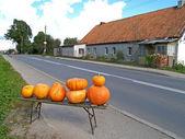 Commerce routier des citrouilles dans le village, russie — Photo