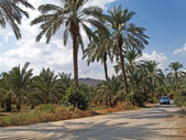 Israel Dirt road in Galilee — Stock Photo