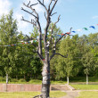"Petrozavodsk. Sculpture ""A tree of desires"" on Onezhskaya Embank — Stock Photo"