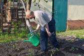 The elderly man waters a kitchen garden from a watering can — Stock Photo
