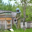 The young beekeeper with smoker on an apiary — Stock Photo