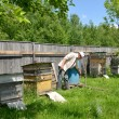Stock Photo: Beekeeper on apiary