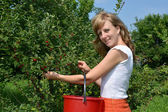 The young woman gathers cherry in a garden — Stock Photo