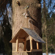 Stock Photo: Birds feeder and titmouse on a tree