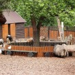 Stock Photo: Domestic hoofed animals shelter in zoo