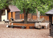 The domestic hoofed animals shelter in a zoo — Stock Photo