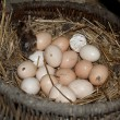 Eggs lie in basket — Stock Photo #40082695