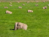 Saman balya yeşil çayır üzerinde — Stok fotoğraf