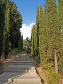 Crimea, Yalta. The cypress avenue in park — Stockfoto
