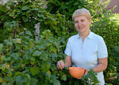 The woman of average years picks berries of black currant  — Stock Photo