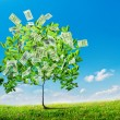 Dollars tree — Stock Photo