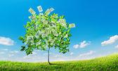 Dolar ağaç — Stok fotoğraf