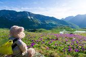 Wandern in Bergen — Stockfoto