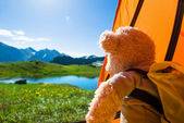 Teddy bear camping — Stockfoto