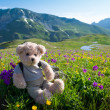 Stock Photo: Teddy bear hiking