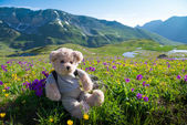 Teddy bear hiking — Stock Photo