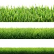 Grass isolated — Stock Photo #42626283