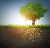 árbol con raíces — Foto de Stock