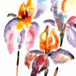 Violet and orange irises — Stock Photo