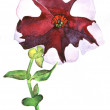 Petunia hand painted watercolor — Stock Photo #12146943
