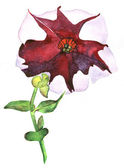 Petunia hand painted watercolor — Stock Photo