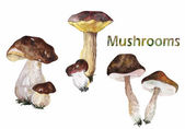 Set of forest mushrooms — Stock Photo