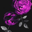 Background with a roses — Stock Photo