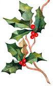 Hand drawn christmas holly — Stock Photo