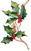 Hand drawn christmas holly — Stock Photo