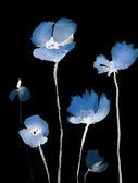 Roztomilý květinové pozadí. akvarel mák — Stock fotografie