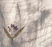 花とグランジ背景 — ストック写真