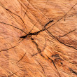 Cut brown wood texture — Stock Photo