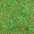 Wet green grass field surface — Stok fotoğraf
