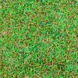 Wet green grass field surface - Stock Photo