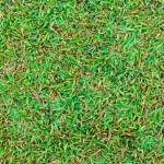 superficie de campo mojado césped verde — Foto de Stock