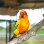 Sun conure parrot — Stock Photo #27596795