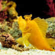Stock Photo: Yellow leaf scorpionfish
