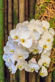 White orchid with bamboo — Stock Photo