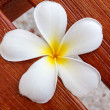 White frangipani flower on wood — Stock Photo